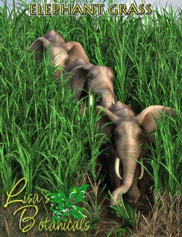 Lisa's Botanicals - Elephant Grass
