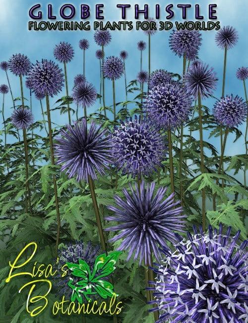 Lisa's Botanicals - Globe Thistle