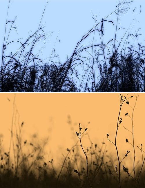 rons-weeds-3