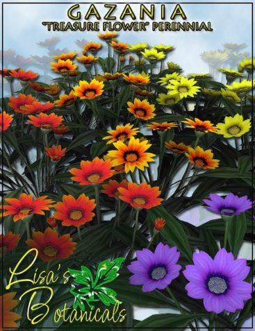 Lisa's Botanicals - Gazania