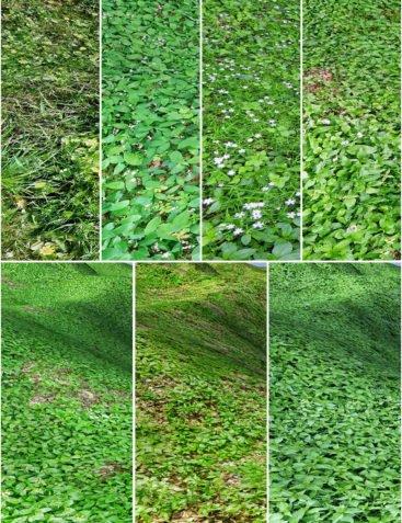 Flinks Spring Ground Textures