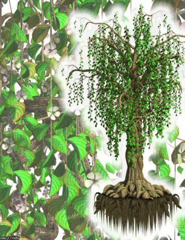 Flinks Blossom Tree 1+2 Bundle