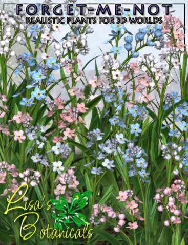 Lisa's Botanicals - Forget-Me-Not