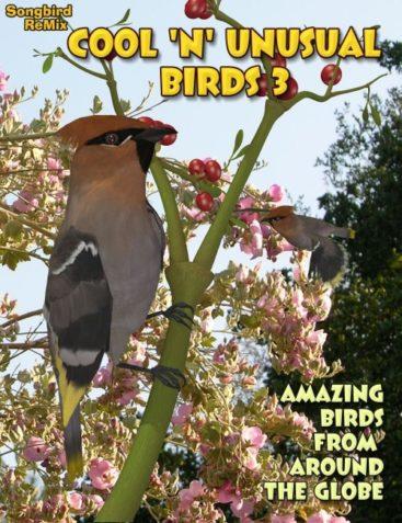 Songbird ReMix: Cool and Unusual Birds 3