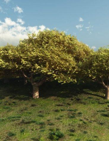 Cedar of Lebanon for Vue