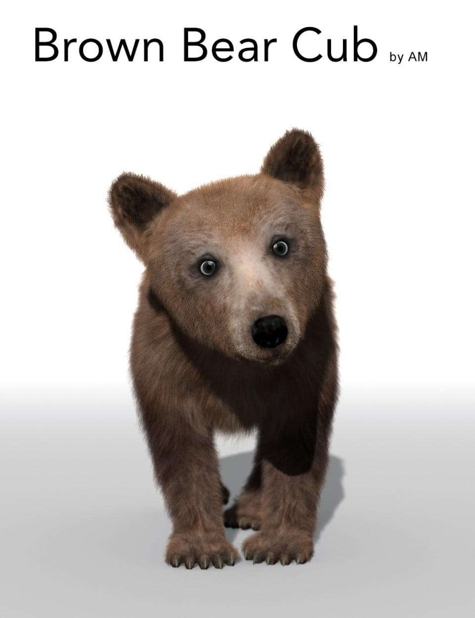 AM Brown Bear Cub