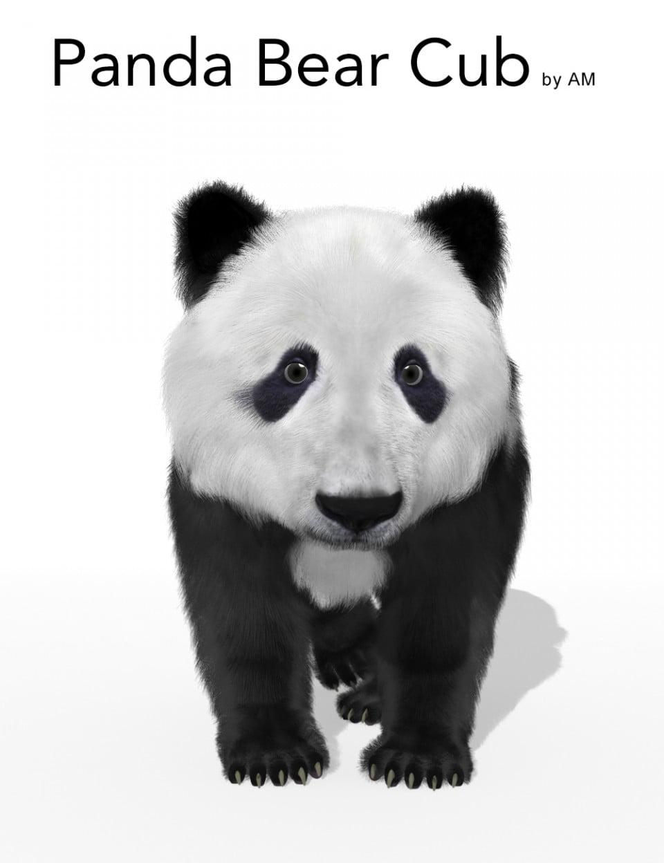 AM Panda Bear Cub