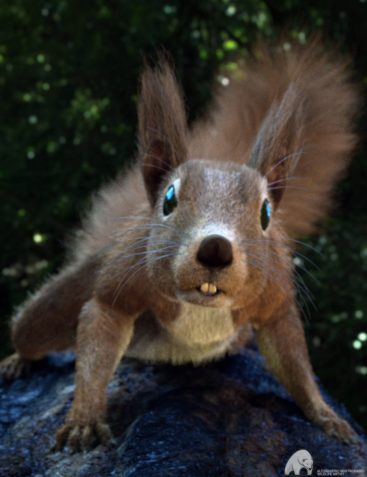 Rodents by AM: Squirrels of Eastern Hemisphere