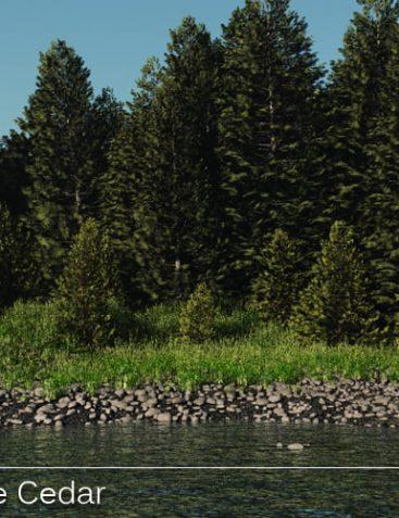 Swidhelm's Eastern White Cedar