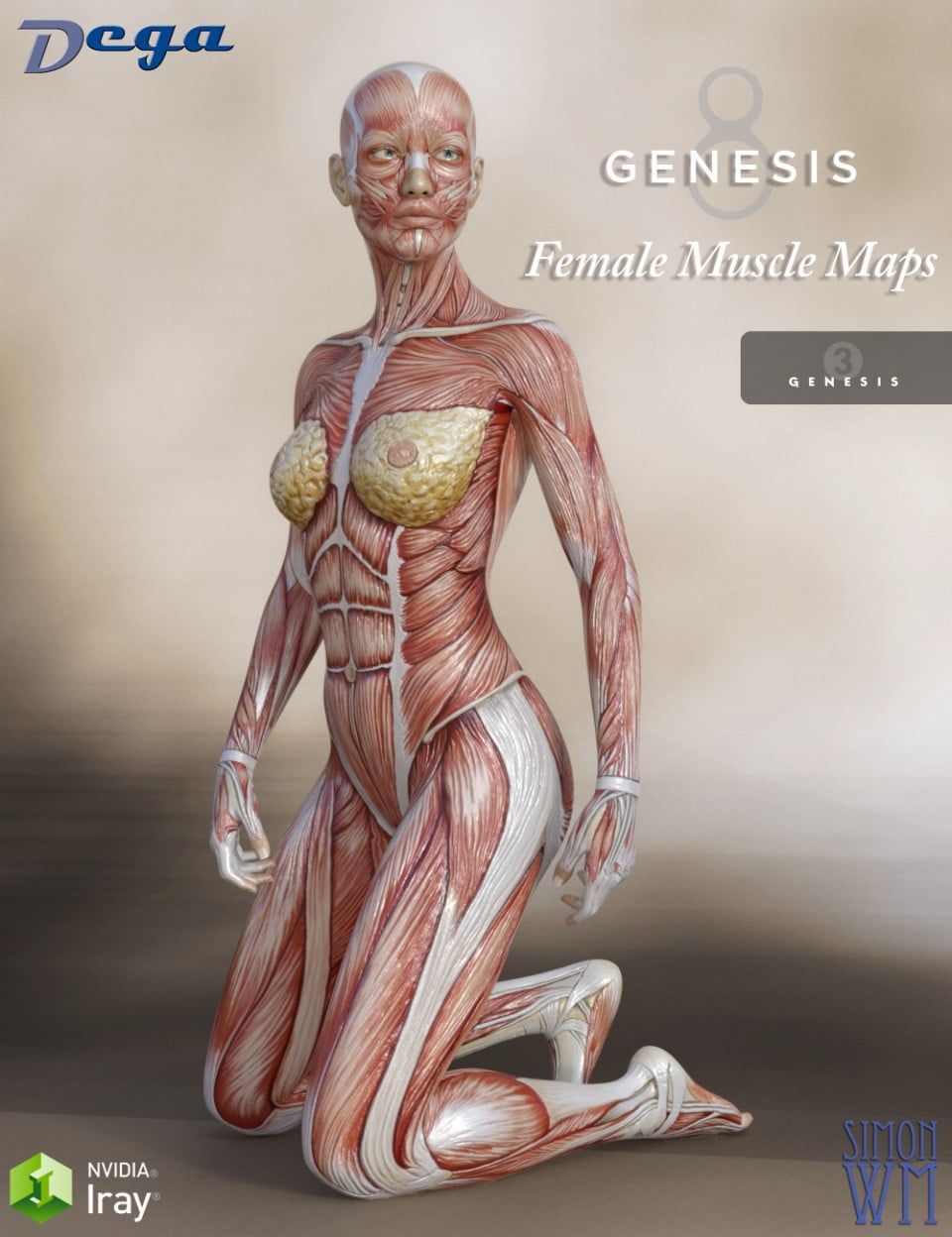 Muscle Maps for Genesis 3 and 8 Female