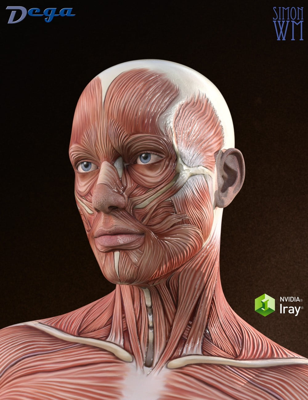 Muscle Maps for Genesis 3 and 8 Male - character, daz-poser-carrara