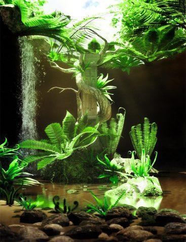 Wild Plants - Wild Ferns Volume 1
