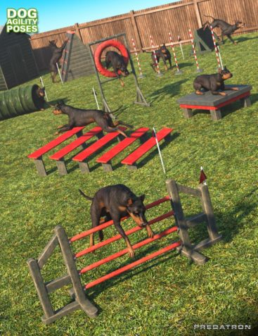 Dog Agility Course Poses