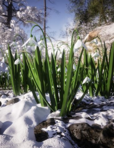 Wild Flowers Vol 6 - Spring Plants