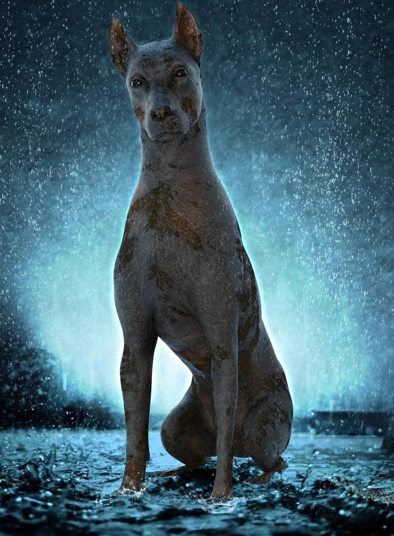 Dirty Dog for Daz Dog 8