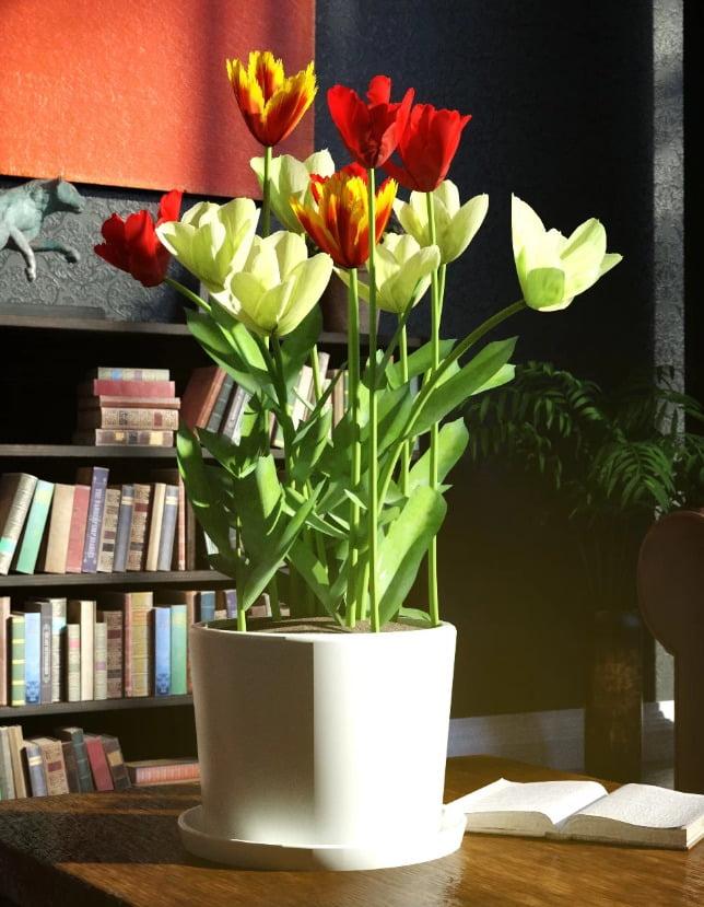 Garden Flowers Vol 2. Tulip Plants