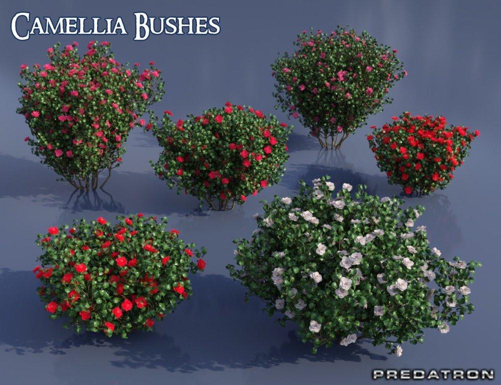 Predatron Camellia Bushes