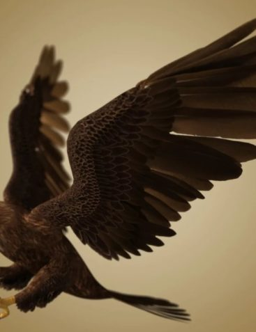 Deepsea's Eagle Aniblocks and Texture Add-On
