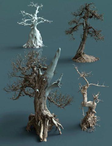4 Dead Bonsai Trees