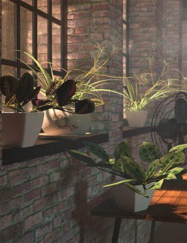 Tropical Plants Vol 4 - House Plants