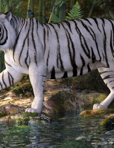 CWRW White Tigers for the HiveWire Tiger